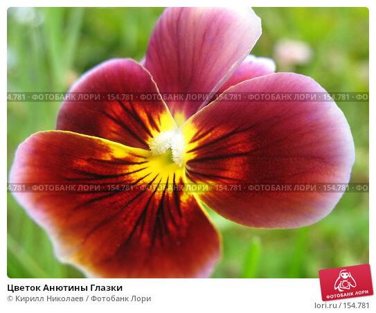 Цветок Анютины Глазки, фото № 154781, снято 22 августа 2006 г. (c) Кирилл Николаев / Фотобанк Лори