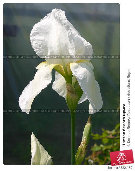 Цветок белого ириса, фото № 322189, снято 14 июня 2008 г. (c) Коннов Леонид Петрович / Фотобанк Лори