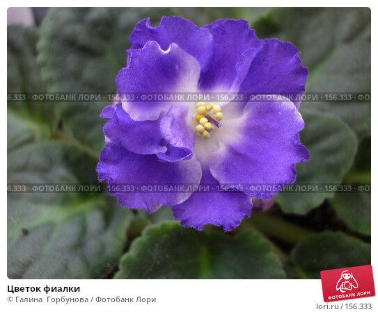 Купить «Цветок фиалки», фото № 156333, снято 4 ноября 2006 г. (c) Галина  Горбунова / Фотобанк Лори