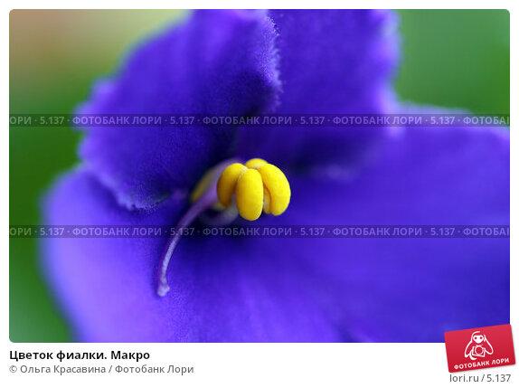 Цветок фиалки. Макро, фото № 5137, снято 16 июня 2006 г. (c) Ольга Красавина / Фотобанк Лори