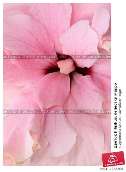 Купить «Цветок hibiskus, лепестки макро», фото № 263901, снято 26 апреля 2008 г. (c) Архипова Мария / Фотобанк Лори
