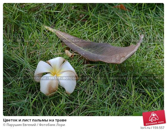Цветок и лист пальмы на траве, фото № 159557, снято 29 апреля 2017 г. (c) Парушин Евгений / Фотобанк Лори