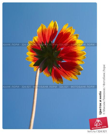 Купить «Цветок и небо», фото № 324921, снято 24 сентября 2006 г. (c) Максим Пименов / Фотобанк Лори