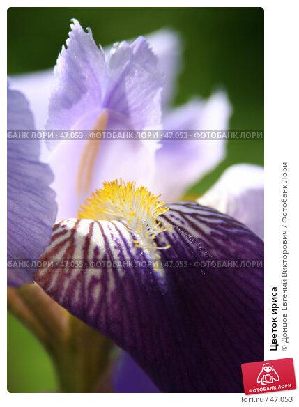 Цветок ириса, фото № 47053, снято 26 мая 2007 г. (c) Донцов Евгений Викторович / Фотобанк Лори