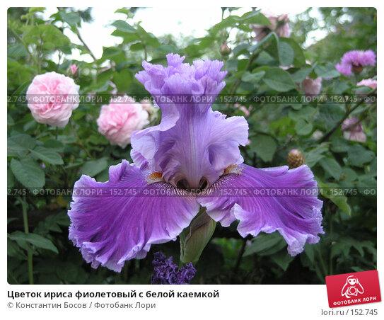 Цветок ириса фиолетовый с белой каемкой, фото № 152745, снято 25 мая 2007 г. (c) Константин Босов / Фотобанк Лори