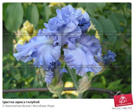 Цветок ириса голубой, фото № 149777, снято 28 мая 2005 г. (c) Константин Босов / Фотобанк Лори