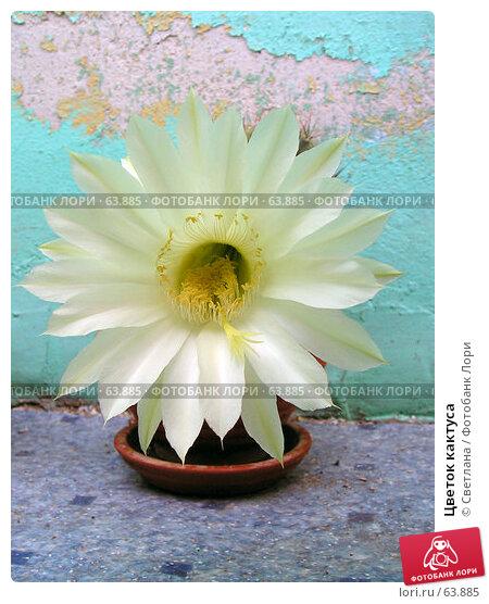 Цветок кактуса, фото № 63885, снято 16 июля 2006 г. (c) Светлана / Фотобанк Лори