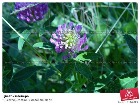 Цветок клевера, фото № 126693, снято 8 июля 2007 г. (c) Сергей Девяткин / Фотобанк Лори