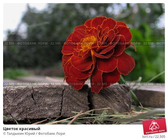 Купить «Цветок красивый», фото № 22505, снято 19 августа 2006 г. (c) Талдыкин Юрий / Фотобанк Лори