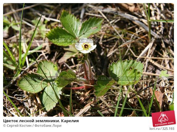 Цветок лесной земляники. Карелия, фото № 325193, снято 13 июня 2008 г. (c) Сергей Костин / Фотобанк Лори
