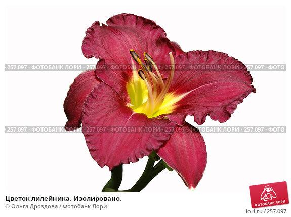 Цветок лилейника. Изолировано., фото № 257097, снято 11 августа 2006 г. (c) Ольга Дроздова / Фотобанк Лори
