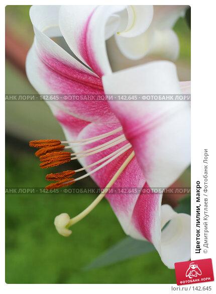 Цветок лилии, макро, фото № 142645, снято 30 июля 2007 г. (c) Дмитрий Кутлаев / Фотобанк Лори