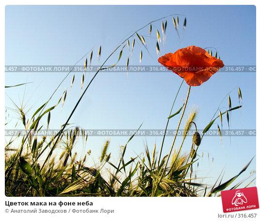 Цветок мака на фоне неба, фото № 316457, снято 26 мая 2005 г. (c) Анатолий Заводсков / Фотобанк Лори