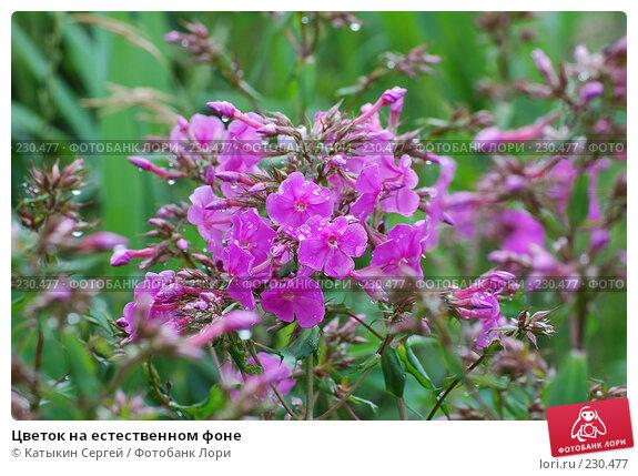 Цветок на естественном фоне, фото № 230477, снято 15 июля 2007 г. (c) Катыкин Сергей / Фотобанк Лори