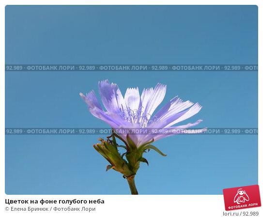 Цветок на фоне голубого неба, фото № 92989, снято 30 сентября 2007 г. (c) Елена Бринюк / Фотобанк Лори