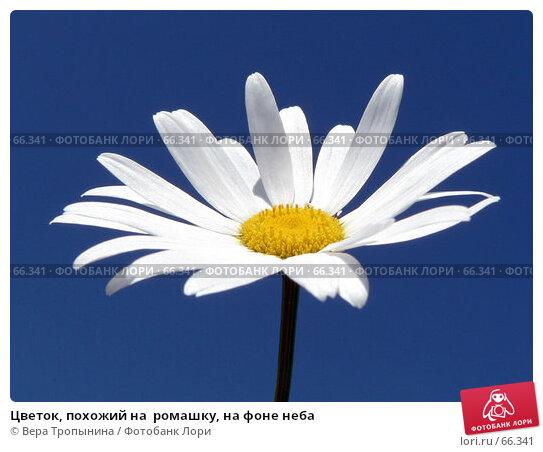Цветок, похожий на  ромашку, на фоне неба, фото № 66341, снято 17 июля 2007 г. (c) Вера Тропынина / Фотобанк Лори