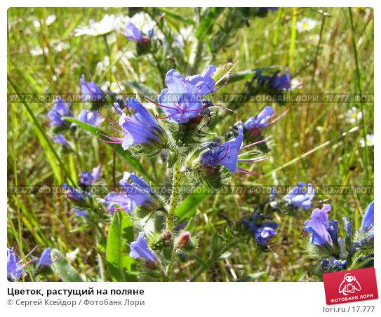 Купить «Цветок, растущий на поляне», фото № 17777, снято 6 июля 2006 г. (c) Сергей Ксейдор / Фотобанк Лори