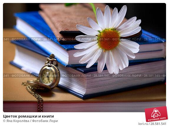 Купить «Цветок ромашки и книги», фото № 28581541, снято 11 июня 2018 г. (c) Яна Королёва / Фотобанк Лори