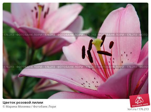 Цветок розовой лилии, фото № 176213, снято 26 мая 2017 г. (c) Марина Мокеева / Фотобанк Лори