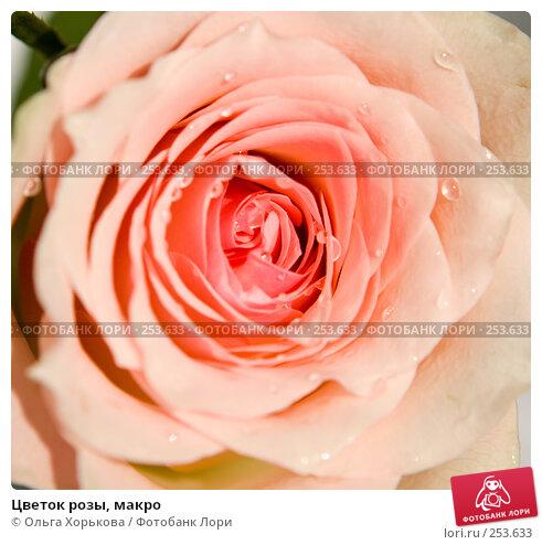 Цветок розы, макро, фото № 253633, снято 10 марта 2008 г. (c) Ольга Хорькова / Фотобанк Лори