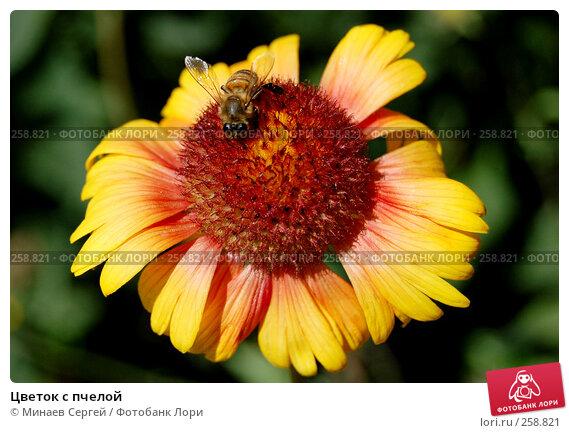 Цветок с пчелой, фото № 258821, снято 11 июня 2007 г. (c) Минаев Сергей / Фотобанк Лори