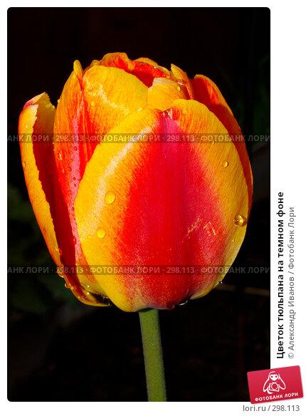 Цветок тюльпана на темном фоне, фото № 298113, снято 23 апреля 2017 г. (c) Александр Иванов / Фотобанк Лори