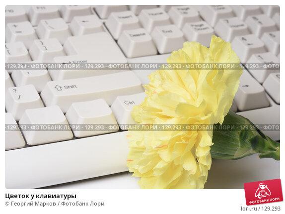 Купить «Цветок у клавиатуры», фото № 129293, снято 4 апреля 2007 г. (c) Георгий Марков / Фотобанк Лори