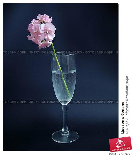 Купить «Цветок в бокале», фото № 30977, снято 26 мая 2006 г. (c) Андрей Лабутин / Фотобанк Лори
