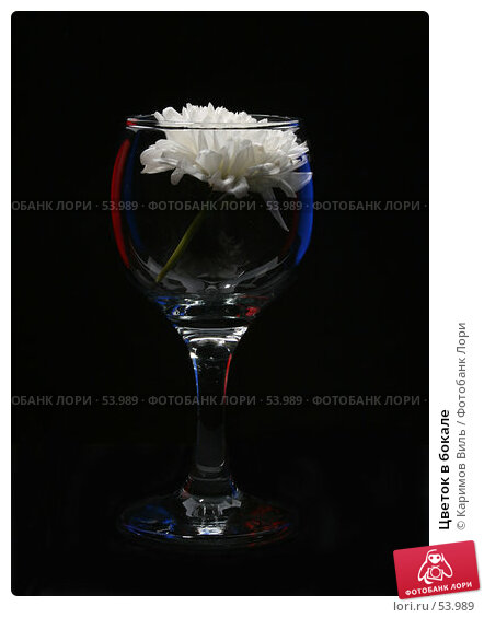 Цветок в бокале, фото № 53989, снято 8 декабря 2006 г. (c) Каримов Виль / Фотобанк Лори