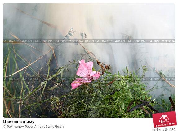 Цветок в дыму, фото № 84189, снято 13 сентября 2007 г. (c) Parmenov Pavel / Фотобанк Лори