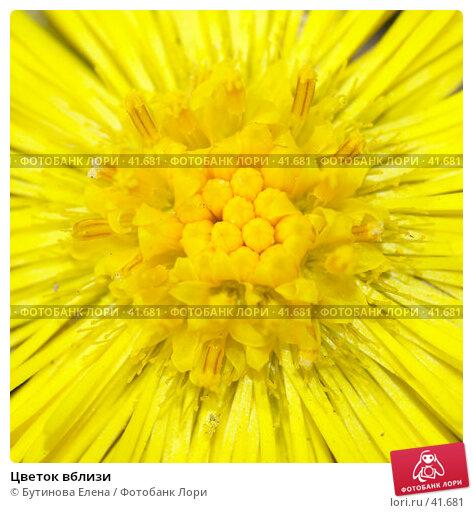 Купить «Цветок вблизи», фото № 41681, снято 16 апреля 2007 г. (c) Бутинова Елена / Фотобанк Лори