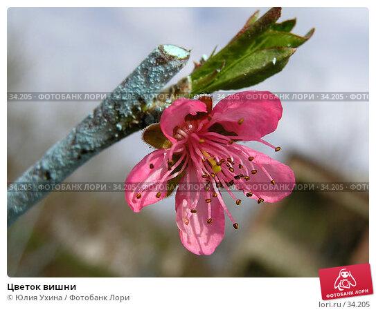 Цветок вишни, фото № 34205, снято 8 апреля 2006 г. (c) Юлия Ухина / Фотобанк Лори