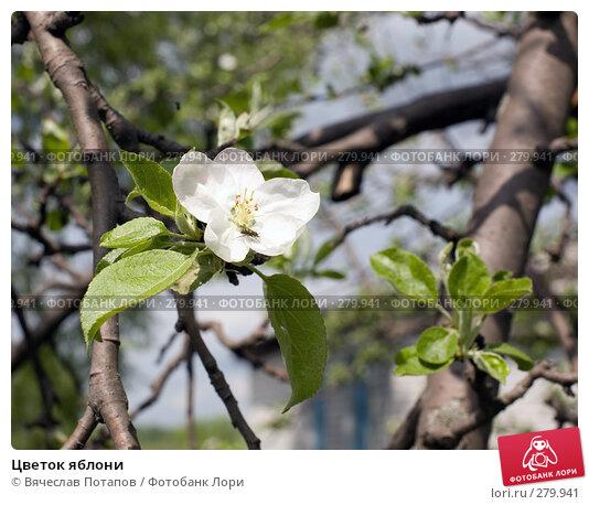 Купить «Цветок яблони», фото № 279941, снято 2 мая 2008 г. (c) Вячеслав Потапов / Фотобанк Лори