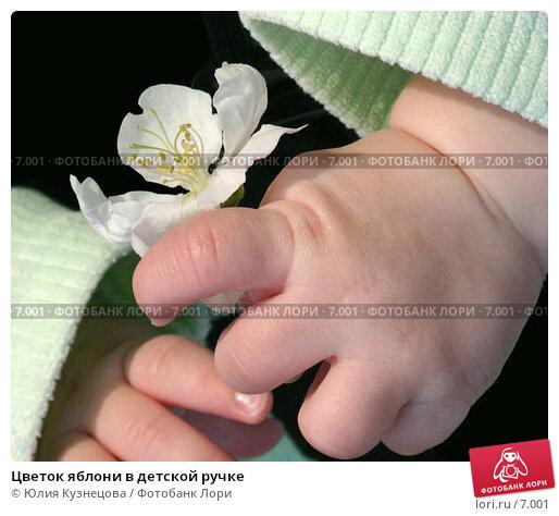 Цветок яблони в детской ручке, фото № 7001, снято 16 августа 2017 г. (c) Юлия Кузнецова / Фотобанк Лори