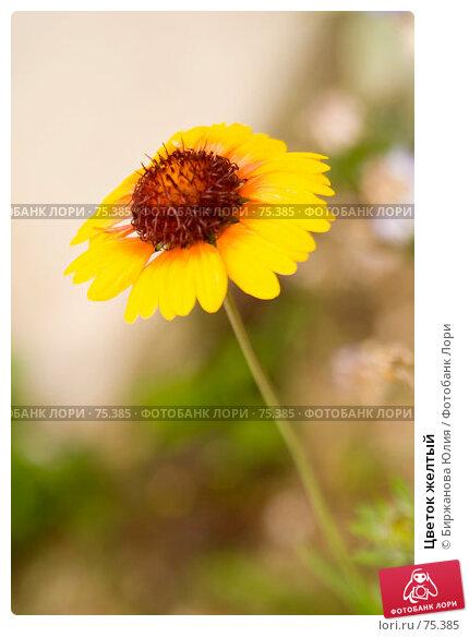 Цветок желтый, фото № 75385, снято 19 августа 2007 г. (c) Биржанова Юлия / Фотобанк Лори