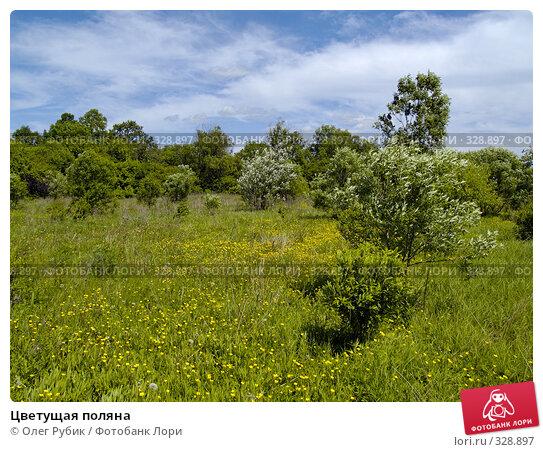 Цветущая поляна, фото № 328897, снято 10 июня 2008 г. (c) Олег Рубик / Фотобанк Лори