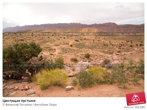 Цветущая пустыня, фото № 192589, снято 6 октября 2007 г. (c) Вячеслав Потапов / Фотобанк Лори