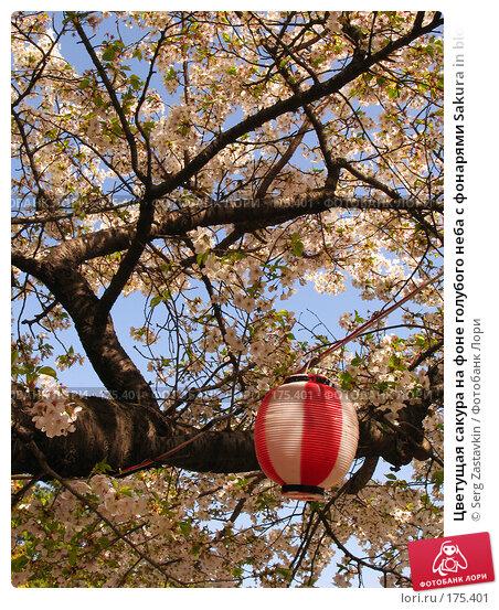 Купить «Цветущая сакура на фоне голубого неба с фонарями Sakura in blossom with lanterns», фото № 175401, снято 3 апреля 2007 г. (c) Serg Zastavkin / Фотобанк Лори