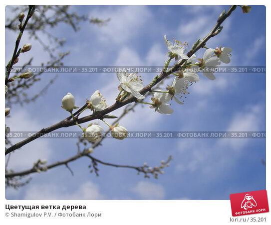 Цветущая ветка дерева, фото № 35201, снято 23 апреля 2007 г. (c) Shamigulov P.V. / Фотобанк Лори