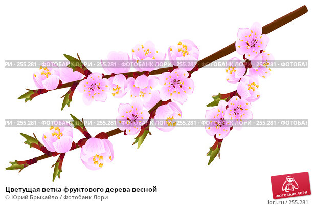 Цветущая ветка фруктового дерева весной, иллюстрация № 255281 (c) Юрий Брыкайло / Фотобанк Лори