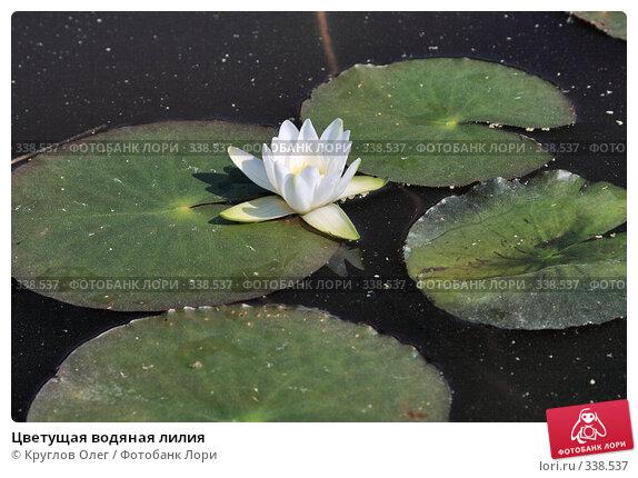 Купить «Цветущая водяная лилия», фото № 338537, снято 20 июня 2008 г. (c) Круглов Олег / Фотобанк Лори