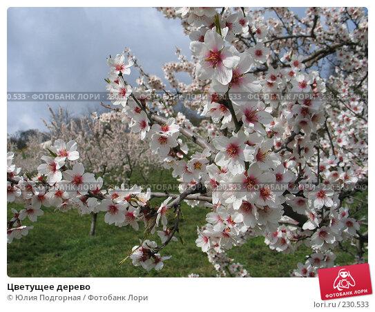 Купить «Цветущее дерево», фото № 230533, снято 20 марта 2008 г. (c) Юлия Селезнева / Фотобанк Лори