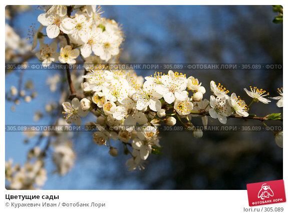 Цветущие сады, фото № 305089, снято 26 апреля 2008 г. (c) Куракевич Иван / Фотобанк Лори