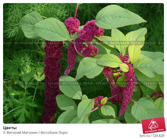 Цветы, фото № 124829, снято 26 июля 2007 г. (c) Виталий Матонин / Фотобанк Лори