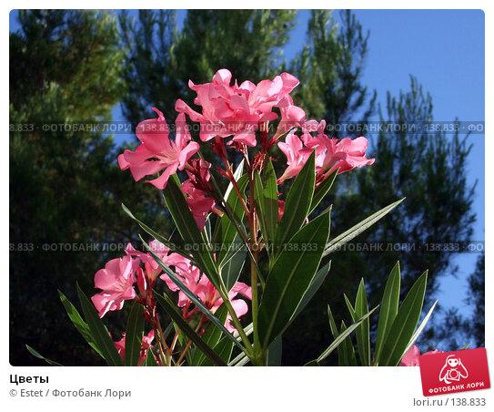 Цветы, фото № 138833, снято 5 июля 2007 г. (c) Estet / Фотобанк Лори