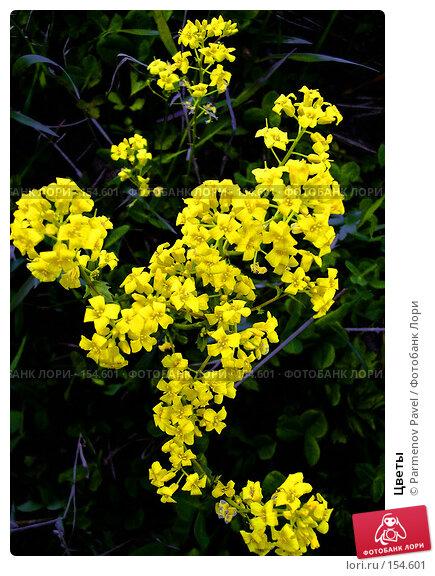 Цветы, фото № 154601, снято 23 мая 2004 г. (c) Parmenov Pavel / Фотобанк Лори
