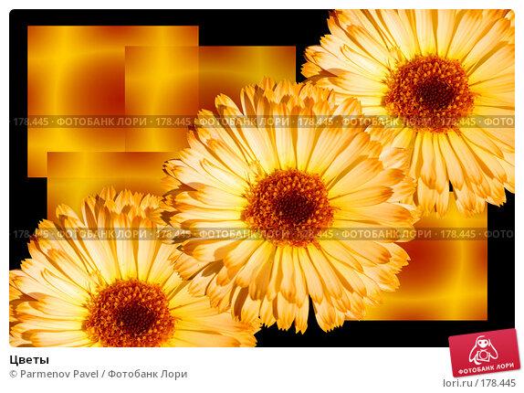 Цветы, фото № 178445, снято 21 декабря 2007 г. (c) Parmenov Pavel / Фотобанк Лори