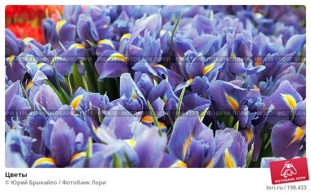 Цветы, фото № 198433, снято 3 февраля 2008 г. (c) Юрий Брыкайло / Фотобанк Лори