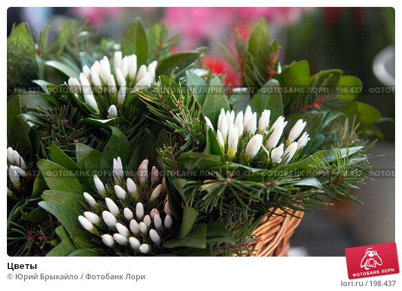 Цветы, фото № 198437, снято 3 февраля 2008 г. (c) Юрий Брыкайло / Фотобанк Лори