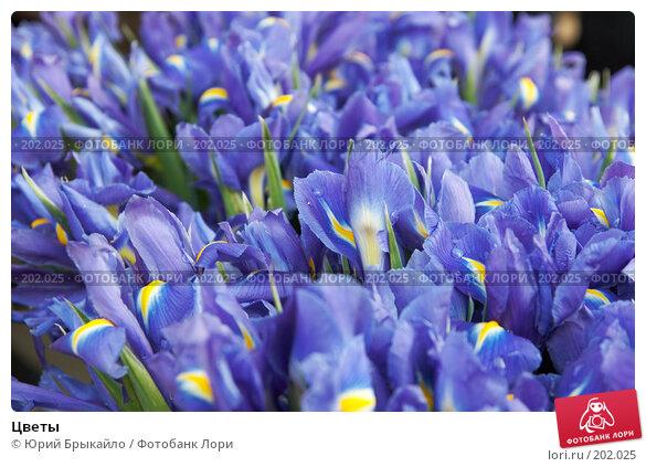 Цветы, фото № 202025, снято 3 февраля 2008 г. (c) Юрий Брыкайло / Фотобанк Лори